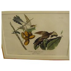 1840s Audubon Framed 1st Royal Octavo Edition Hand Colored Yellow-Billed Cuckoo