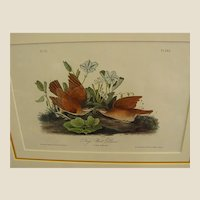 1840s Audubon Framed 1st Royal Octavo Edition Hand Colored Key West Dove