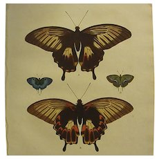 1770s Hand Colored Engraving Butterfly Plate 40 from Cramer's Papillons Exotiques Volume One