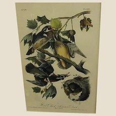 1840s Audubon 1st Royal Octavo Edition Hand Colored Wood Duck