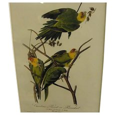 1840s Audubon 1st Royal Octavo Edition Carolina Parrot