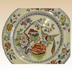 Gorgeous Mason's Ironstone China Plate Circa 1820s