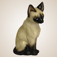 Adorable Harvey Knox Kingdom Siamese Cat