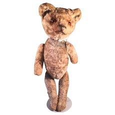 Very Old Teddy Bear