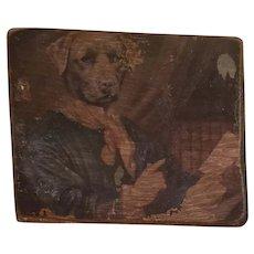 Old Dog Portait on Wooden Panel