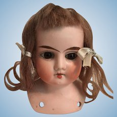 Lovely German Bisque Doll Head with Shoulder Plate