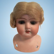 German Bisque Doll Shoulder Head