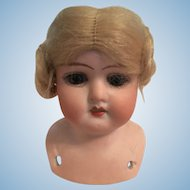 German Bisque Doll Shoulder Head