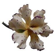 Capo-di-Monte orchid