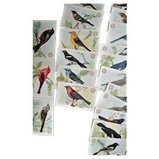 Arm & Hammer Advertising 30 Bird Cards