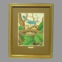 1882 Chromolithograph Bird Print Blue Jay