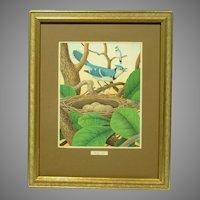 1882 Blue Jay Print