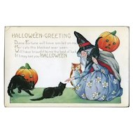 H-16 Witch, Black Cats, Jack-o-Lanterns, Owl, Whitney Halloween Postcard