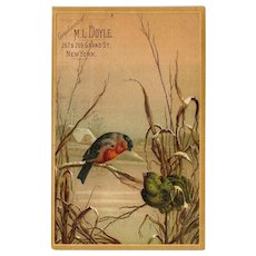 Birds Perched on Winter Grass in Snow, M. L. Doyle, NY Victorian Trade Card