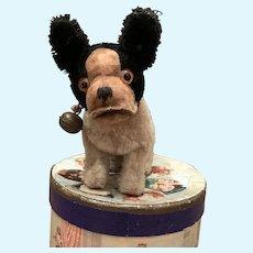Little Steiff Bully Dog