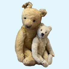 Two Sweet Steiff Teddy Bears from the 30's