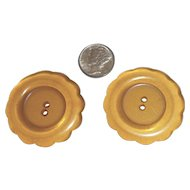Pair XL Extra Large Bakelite Thick Chunky Apple Juice Scallop Daisy Buttons