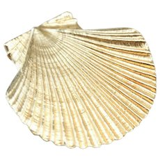 Scallop Shell Nautical Pin or Pendant