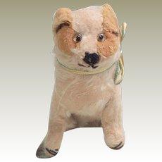 Small Mohair dog c1920