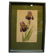 J Sisson Signed Iris Watercolor Painting Framed