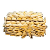 Shell Covered Souvenir Box Small Jewelry Trinket