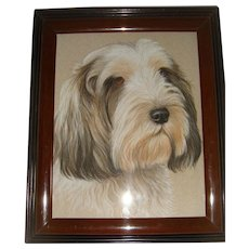Pastel drawing of Bearded Collie