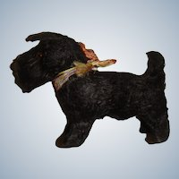 Cute black Scottie Putz dog