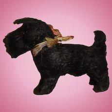 Cute black Scottie Putz dog