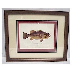 Framed Fish Print  by Fred  Everett Large Mouth Black Bass Outdoors Fishing