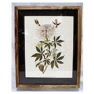 Hummingbird Audubon Print Framed 50% OFF