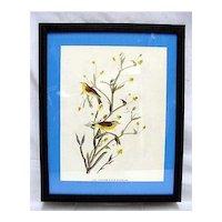 Framed Print Audubon Bird Yellow Palm Warbler