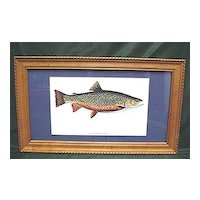 Brook Trout Framed Fish Print Outdoors Fly Fishing