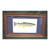 Original Framed Brown Trout Fish Print Outdoors Fly Fishing