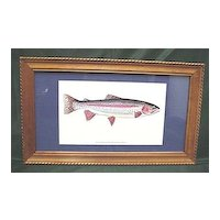 Framed Fish Print Of A Rainbow Trout Outdoors
