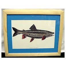 Lake Trout Fish Print Framed Outdoors