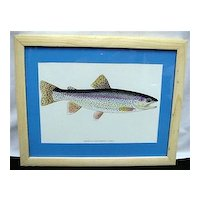 Cutthroat Trout Framed Fish Print Outdoors