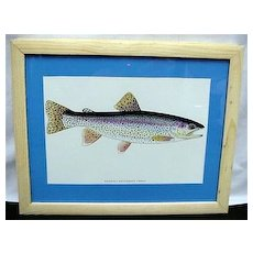 Cutthroat Trout Framed Fish Print 50% OFF