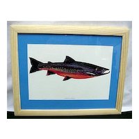 Arctic Char Fish Print Framed Fly Fishing Outdoors