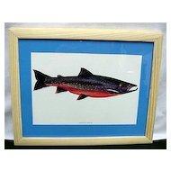 Arctic Char Fish Print Framed