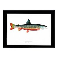 Fish Print Quebec Red Trout Fly fishing Outdoors