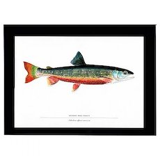 Fish Print Quebec Red Trout