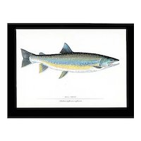 Fish Print Print Bullhead Trout Fly Fishing Outdoors