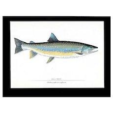 Fish Print Print Bullhead Trout Fly Fishing Outdoors