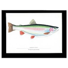 Fish Print Kamloops Trout Fly Fishing Outdoors