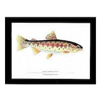 Fish Print Oregon Redband Trout Fly Fishing