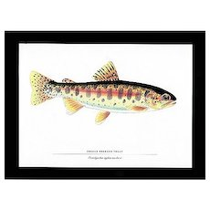 Fish Print Oregon Redband Trout
