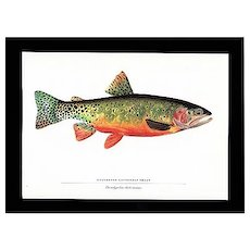 SOLD   See 20 others listed for sale  Trout Print Greenback Cutthroat Trout