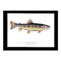 Fish Print Columbia River Redband Trout