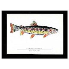 Fish Print Columbia River Redband Trout