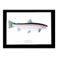 Fly Fishing Print Steel Head Trout Outdoors Fish Print